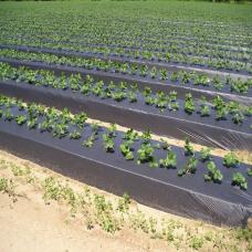 فیلم مالچ کشاورزی